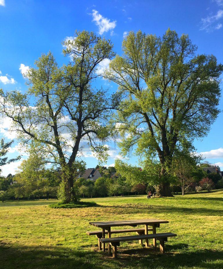 foto_arbres